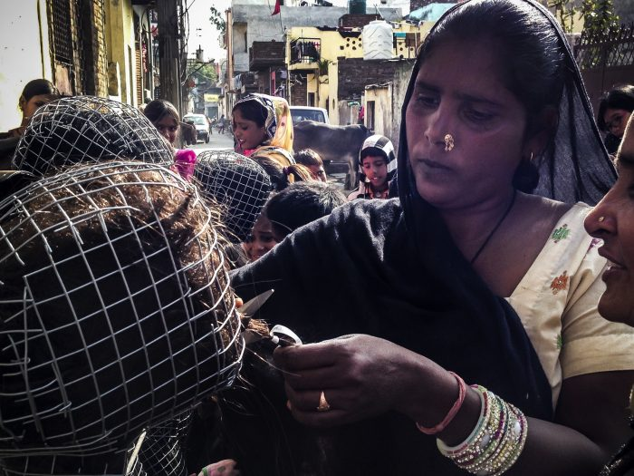 Nuova Delhi 2015 Villaggio di Najafgarh
